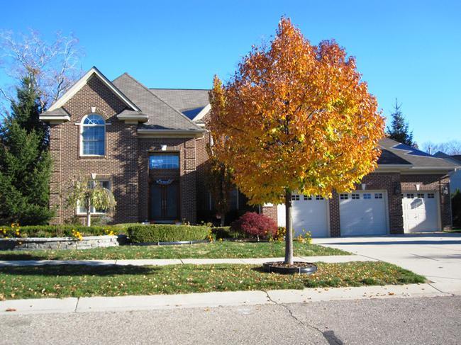Neighborhood of Willowbrook Farm Home Elevation in Novi MI