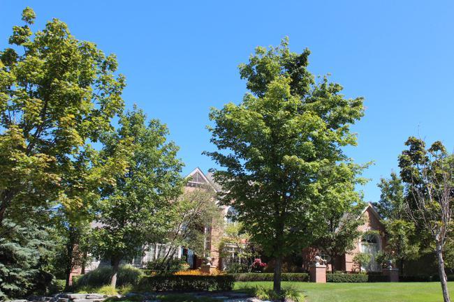Luxury real estate in Woods of Edenderry in Northville, MI 20